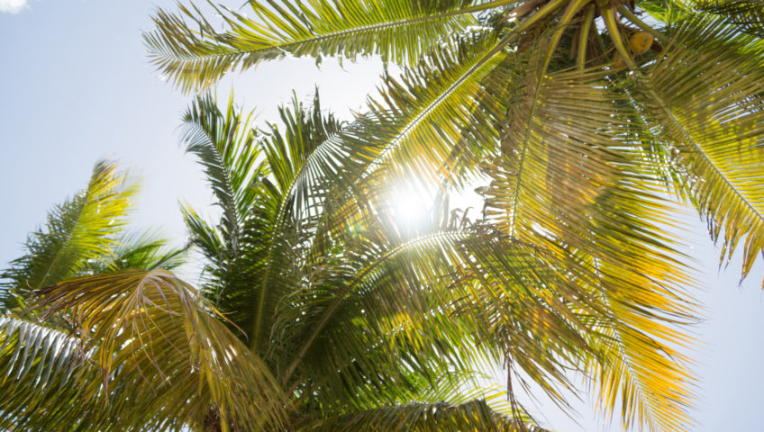 sunshine through palm trees