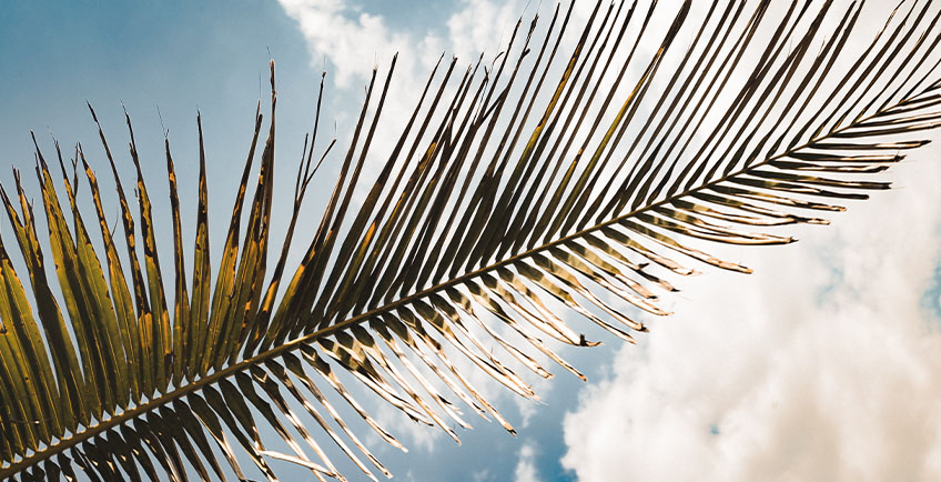 photo of a palm frond with the sky on the background